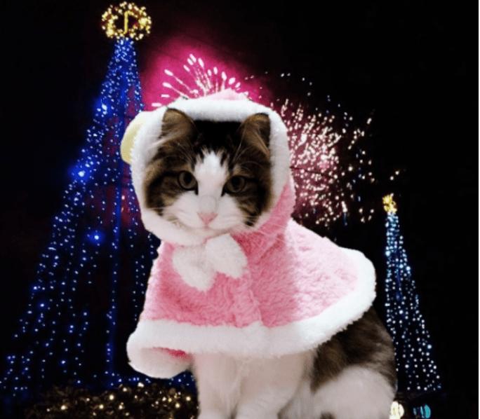 猫のクリスマスパーティー