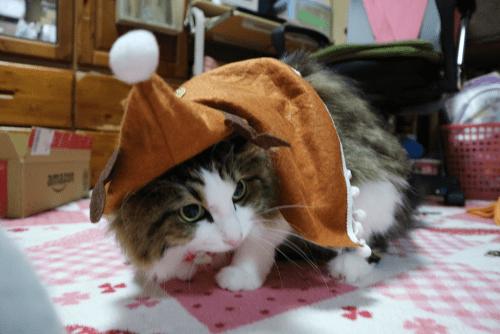 トナカイコスプレの猫