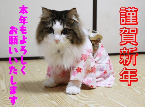 着物を着た猫