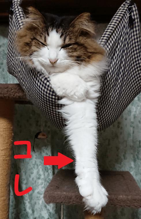 ネコの持ち手のように長い手