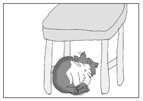 落とした洗濯物を枕にして寝る猫