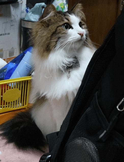 猫とバッグ