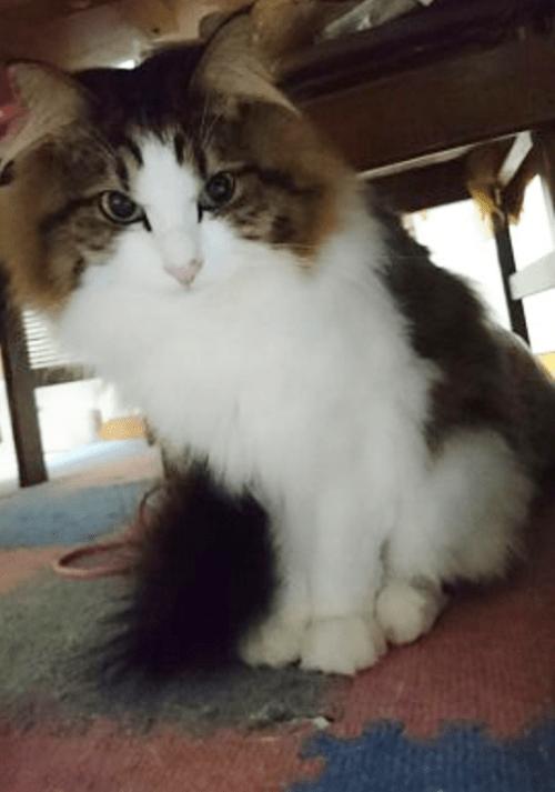 機嫌の悪い猫