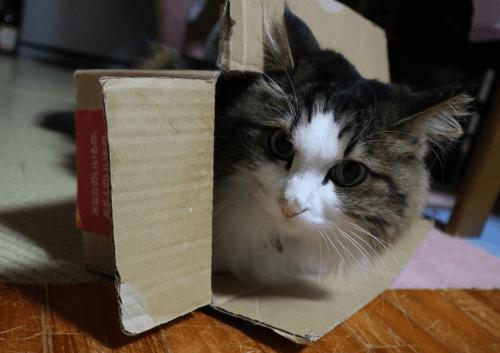 ソーシャルディスタンスな猫