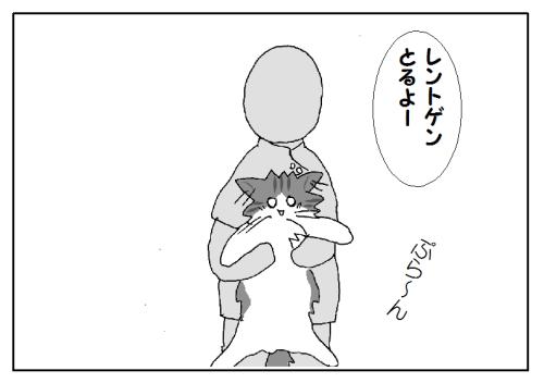 動物病院での猫の様子