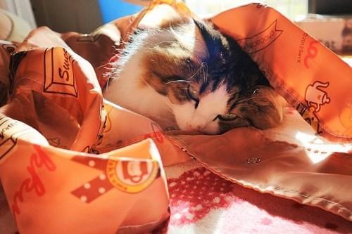 エコバッグに入る猫