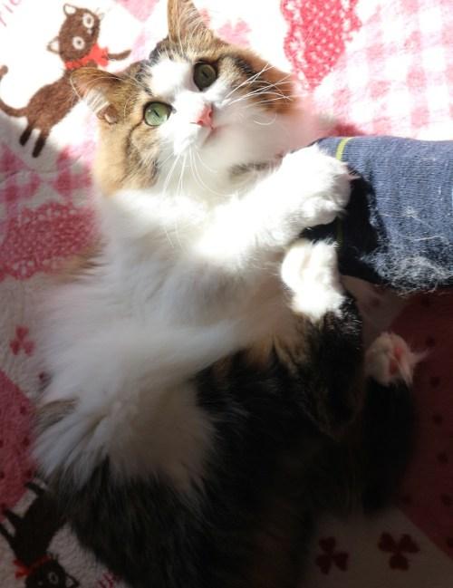 足に攻撃をする猫