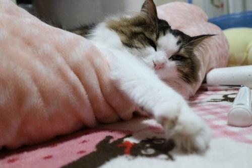 だらしなく寝る猫