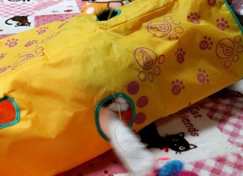 カシャカシャぶんぶんで遊ぶ猫