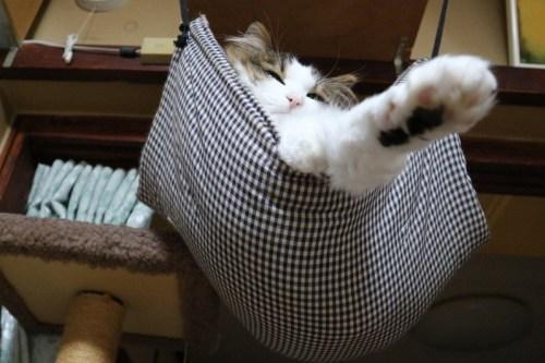 猫用ハンモック