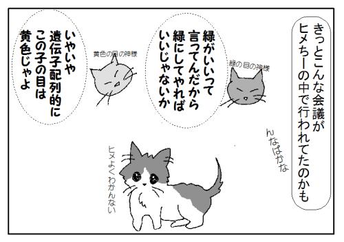 猫の目の色 種類