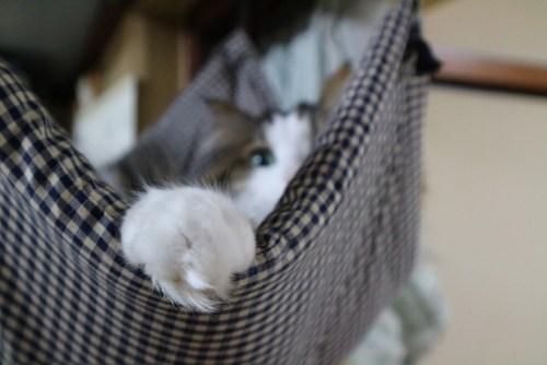 猫の手のひげ 手根触毛