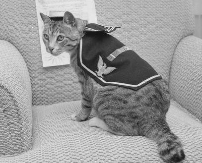プーリ 船の猫
