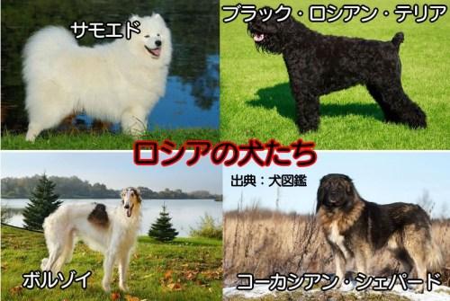 ベルクマンの法則 犬