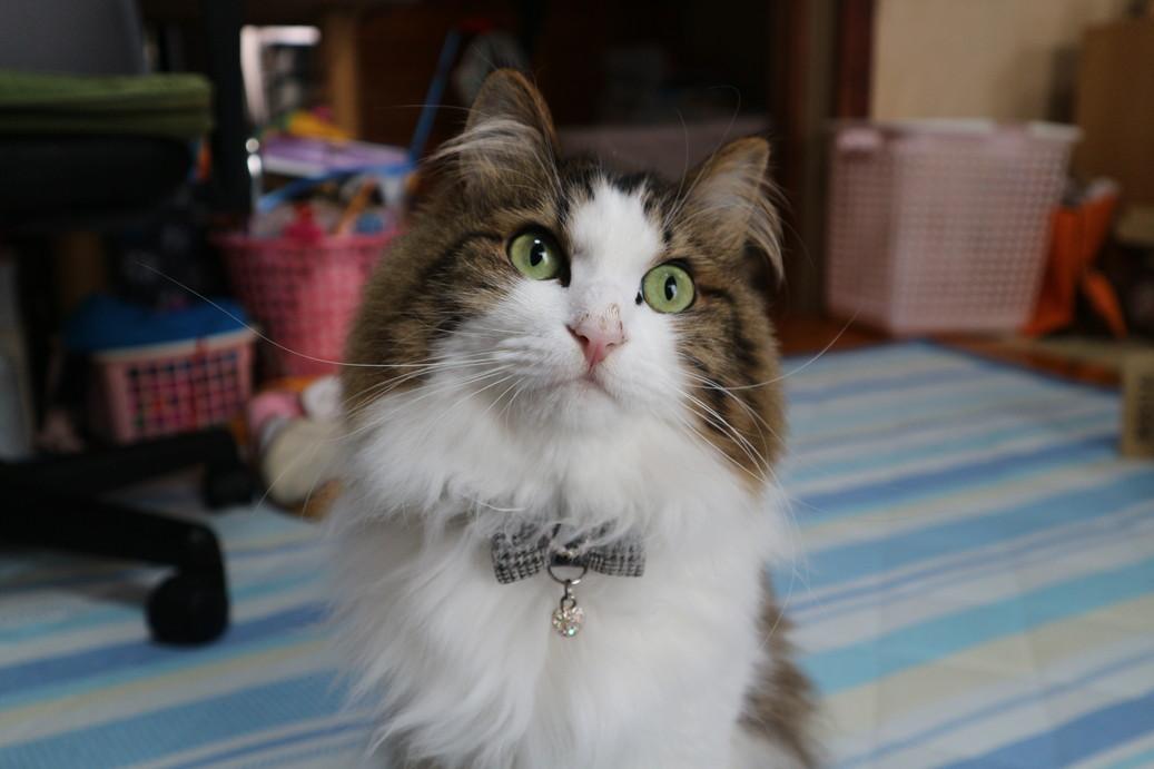 日本にある 猫の銅像