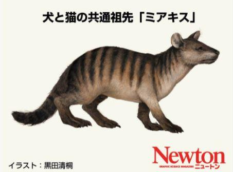 犬と猫の共通する祖先といわれている「ミアキス」