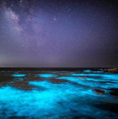 発光生物の神秘の世界!日本で見られる光る生き物の種類や場所、時期を紹介!