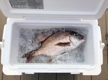 クーラーボックスの魚の臭い匂いも取れる!おすすめの洗い方を紹介!