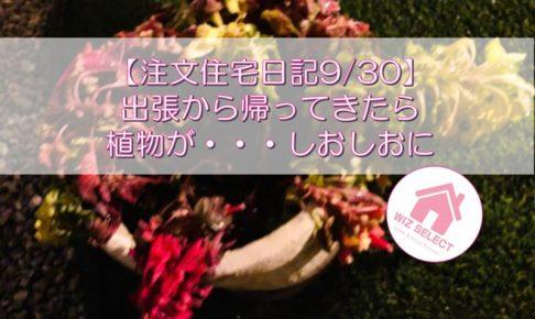 【注文住宅日記9/30】出張から帰ってきたら植物が・・・しおしおに