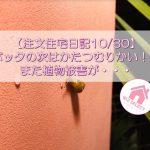 【注文住宅日記10/30】バッタの次はかたつむりかい!!また植物被害が・・・