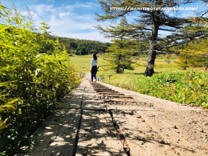 長野の観光地「池の平湿原」を朝散歩!イイ運動になりますよ