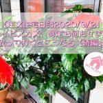 【注文住宅日記2020/9/2】ハイビスカス、剪定も何もせずに放っておくとこうなる【続編】