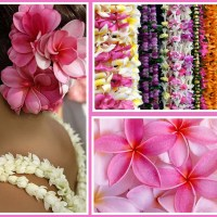 May Day is Lei Day in Hawaii