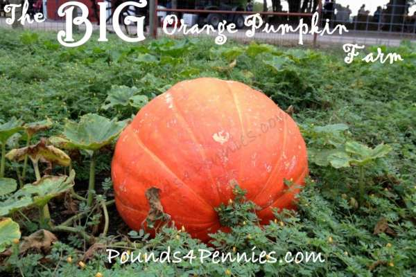 Big Orange Pumpkin Farm