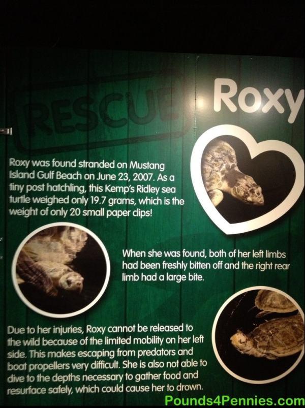 Sea Life Aquarium Sea Turtle Rescue Center