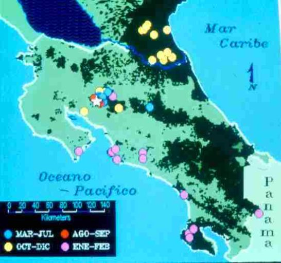 Data on three-wattled bellbirds in Costa Rica show clear elevational migratory movements on two sides of the country.