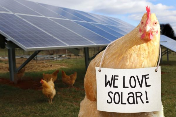 Four of Your Virginia Neighbors Who Have Gone Solar