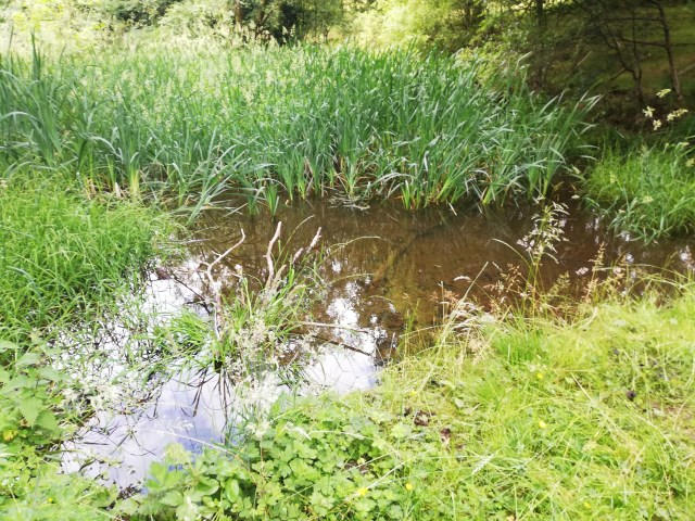 a small patch of visible, brown water surrounded by lots of weeds.
