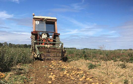 Venez ramasser vos pommes de terre à la ferme de la Noë
