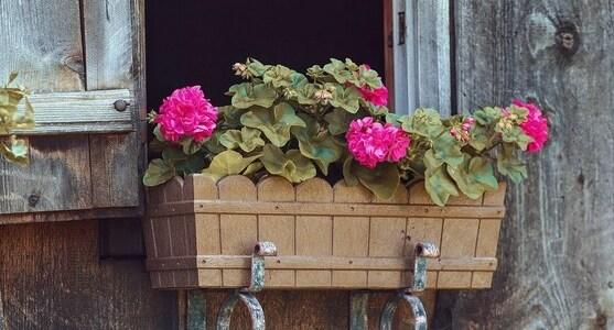 Concours des Maisons Fleuries