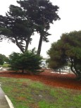 Attenborough Park trees