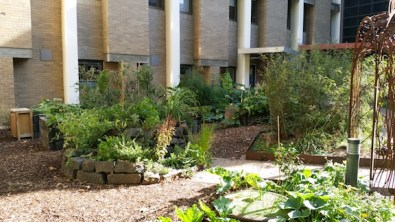 community-garden-3