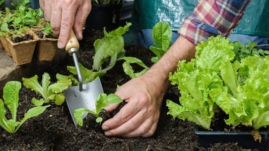 Cultiva frutas y verduras creando tu propio huerto en casa