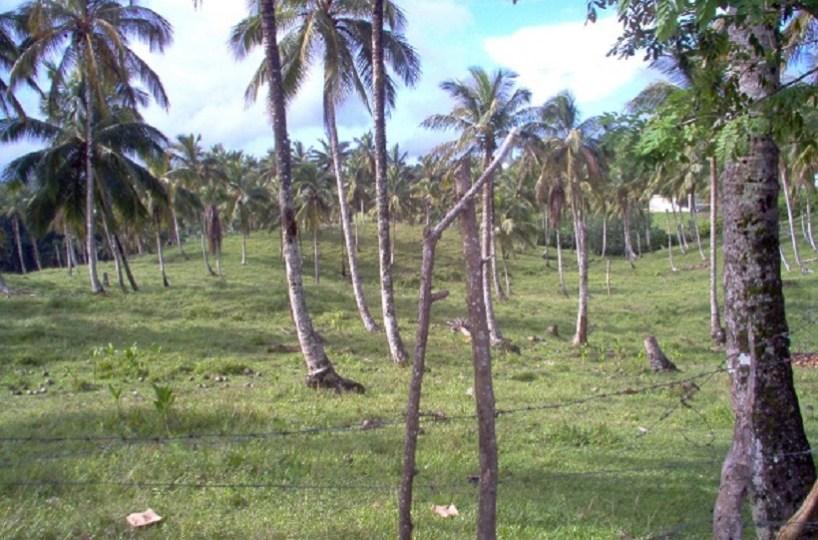 Las Terrenas - Sánchez km 4