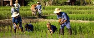 Sudeste Asiático: novo passo pela legalização da base