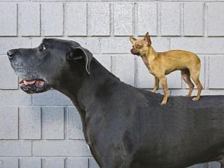 Les chiens du propriétaire voisin