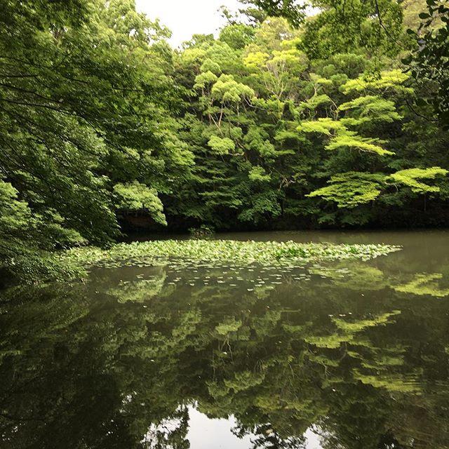 Luxe, calme et volupté - Shinto shrine gardens