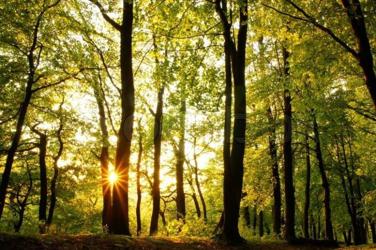 inspiration-trees-forest-light