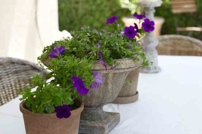 colorful-flowers-backyard-refresh-patio
