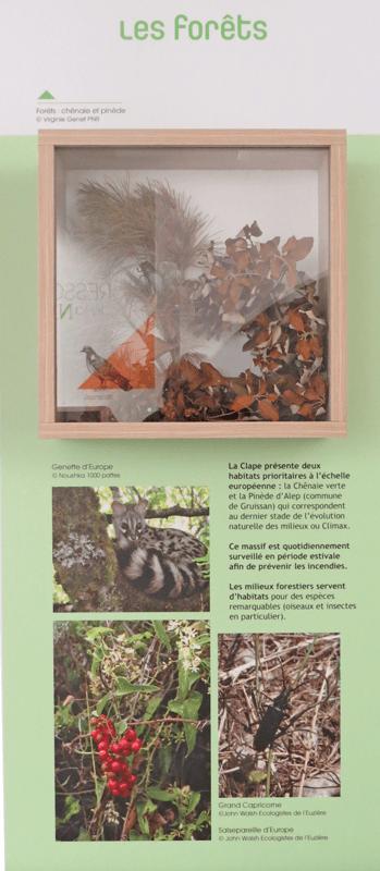 La Clape et ses milieux - les forêts