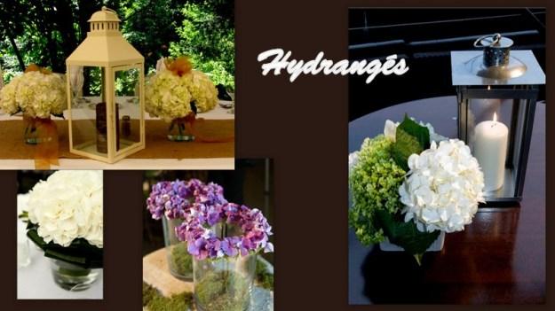 1-hydrangés-001