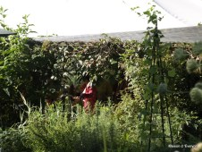 Ambiance au jardin
