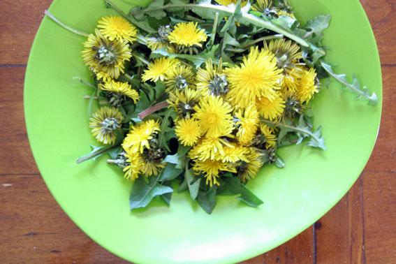 dandelionsalad
