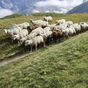 Photo Parc et pastoralisme 2016