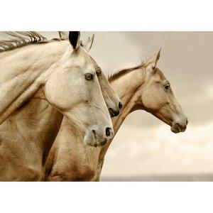 Sepia Horses decoupage