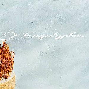 Eucalyptus Beton Ciré bladafwerking